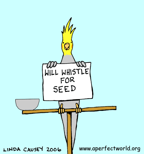 Wil whistle for seed